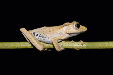 Close up of frog sitting on twig against black background