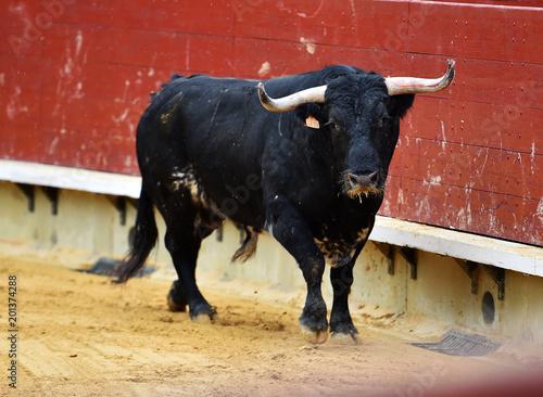 Toro Español En Plaza De Toros Stockfotos Und Lizenzfreie Bilder