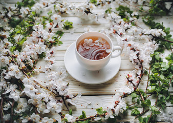 White cup of green tea and spring apricot blossom on a wooden background. Rustic.