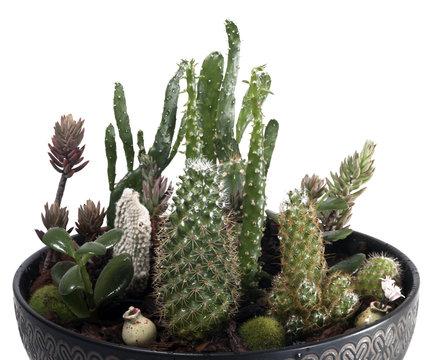 Beautiful succulent terrarium