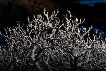 bonsai tree branches at night