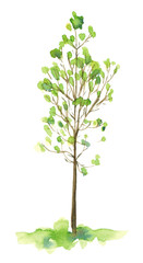 Watercolor hand drawn sketch illustration of young tree with green leaves isolated on white