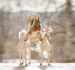 red squirrel is in a split between royal horses