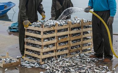 fishermen are washing fish