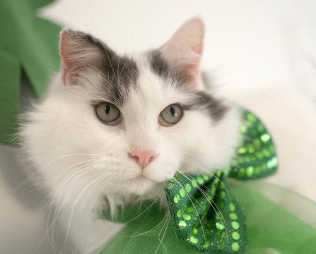 St Patricks Cat