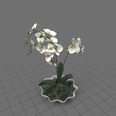 Orchid plant in a shell