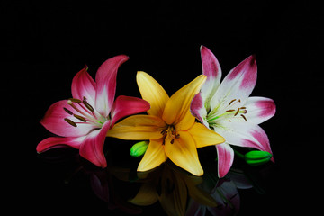 beautiful lilies and reflection