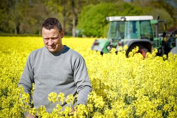 Rapsanbau - Landwirt kontrolliert Blütenstand in seinem Rapsfeld