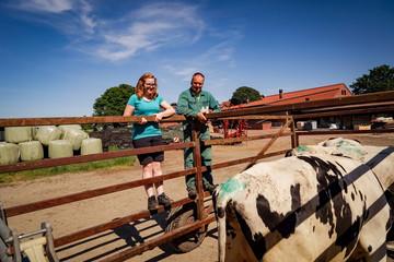 Viehaustrieb im Frühjahr, Landwirt und Tocher begutachten Rinder im Fangwagen