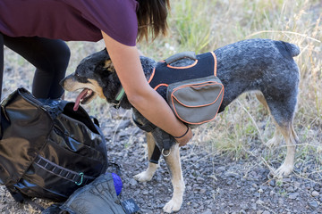 Woman attaching hiking dog backpack, Mount Pisgah, Oregon, USA