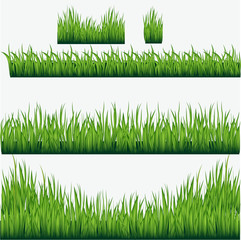 Vector  green grass borders set. Isolated grass on a white background. Vector illustration.