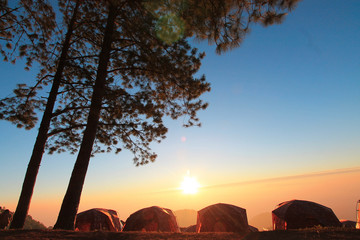 camp Mountain Pine forest