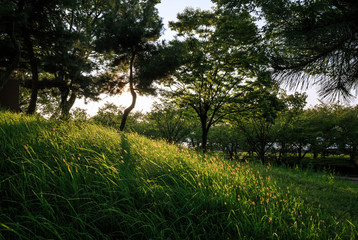 Sun lights up the lush grass on Japan's official smallest mountain, Tempozan in Osaka. The peak is 4.5 meters above sea level.