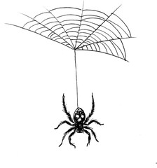 Ink black and white drawing of a spider on web