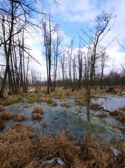 Rezerwat przyrody Olszyny Niezgodzkie zimową porą - zamarznięte mokradła, wyschnięta trawa i drzewa bez liści