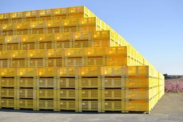 Pirámide de palés, palé, caja, cajas, de plástico amarillo, para transportar fruta