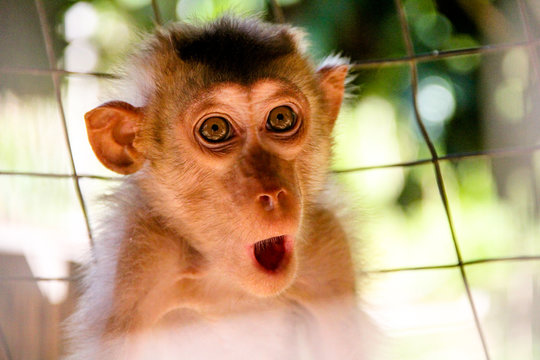 Monkey expression or meme are captured