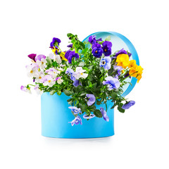 Gift box with pansy flowers