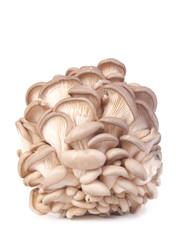 Mushrooms oyster