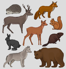 Wild northern forest animals set, hedgehog, raccoon, squirrel, deer, fox, hare, beaver, wolf, vector Illustrations on a grey background