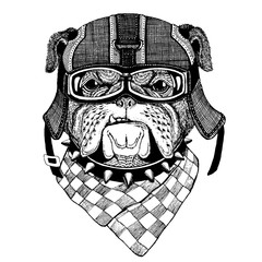 Bulldog, dog. Animal wearing motorycle helmet. Image for kindergarten children clothing, kids. T-shirt, tattoo, emblem, badge, logo, patch