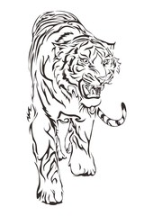 Tiger walking and roar design by hand drawing for tribal tattoo vector with white background