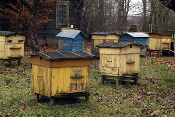 Old bee hives in autumn.