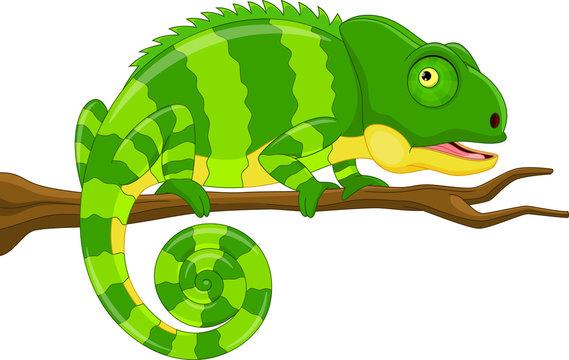 Vector illustration of cartoon green chameleon isolated on white background