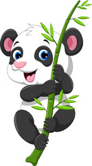 Cute baby panda hanging on a bamboo tree