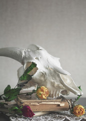 Still life with dry roses and animal skull on vintage book