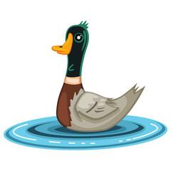 Duck bird cartoon vector illustration isolated on white background.