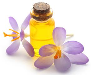 Saffron crocus flower with extract
