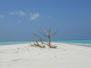 Driftwood on beach, Vashafaru, Maldives