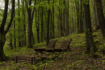 Wooden chairs in the forest, Bulgaria