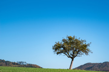nur ein einfacher aber schöner Baum...