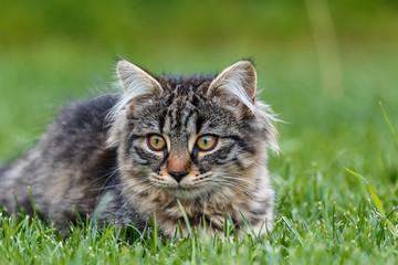 Kleine Katze die im Gras spielt_001