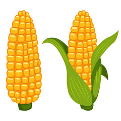 Corn cobs vector cartoon flat icon of sweet vegetable isolated on white background.