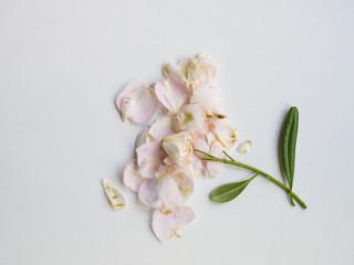 Leaflees pink flower