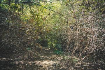 gray bush of dry thorns.