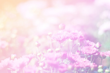 Beautiful abstract sweet color of floral with pink flower buds,  pastel color style for background.