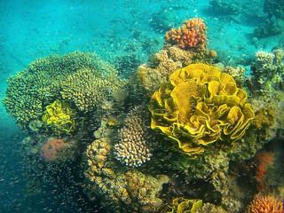 Foto op Aluminium Onder water coral reef in the Red Sea, Eilat, Israel