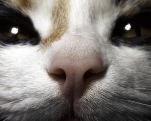 cat's nose close-up