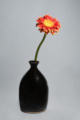 daisy flower in vase