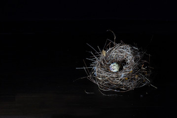 Nest bird and Eggs of bird on dark background and space for message