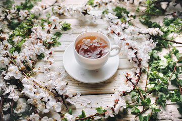 Cup of green tea and spring apricot blossom on a white wooden background. Rustic.