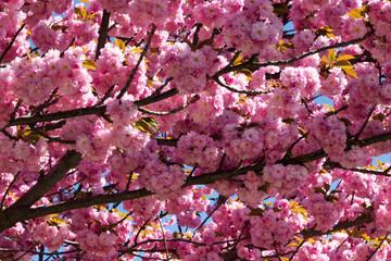 Fototapete - Baum im Frühling