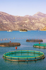 Sunny landscape with fish farm and two small islands in the Bay of Kotor (Adriatic Sea). Montenegro