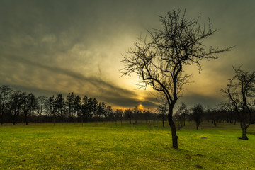 evening landscape. silhouette of a bare tree on a green lawn in a spring city park against a backdrop of a dramatic sunset