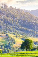 lonely tree on the grassy field in mountains. lovely rural scenery in summer