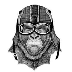 gorilla, monkey Animal wearing motorycle helmet. Image for kindergarten children clothing, kids. T-shirt, tattoo, emblem, badge, logo, patch